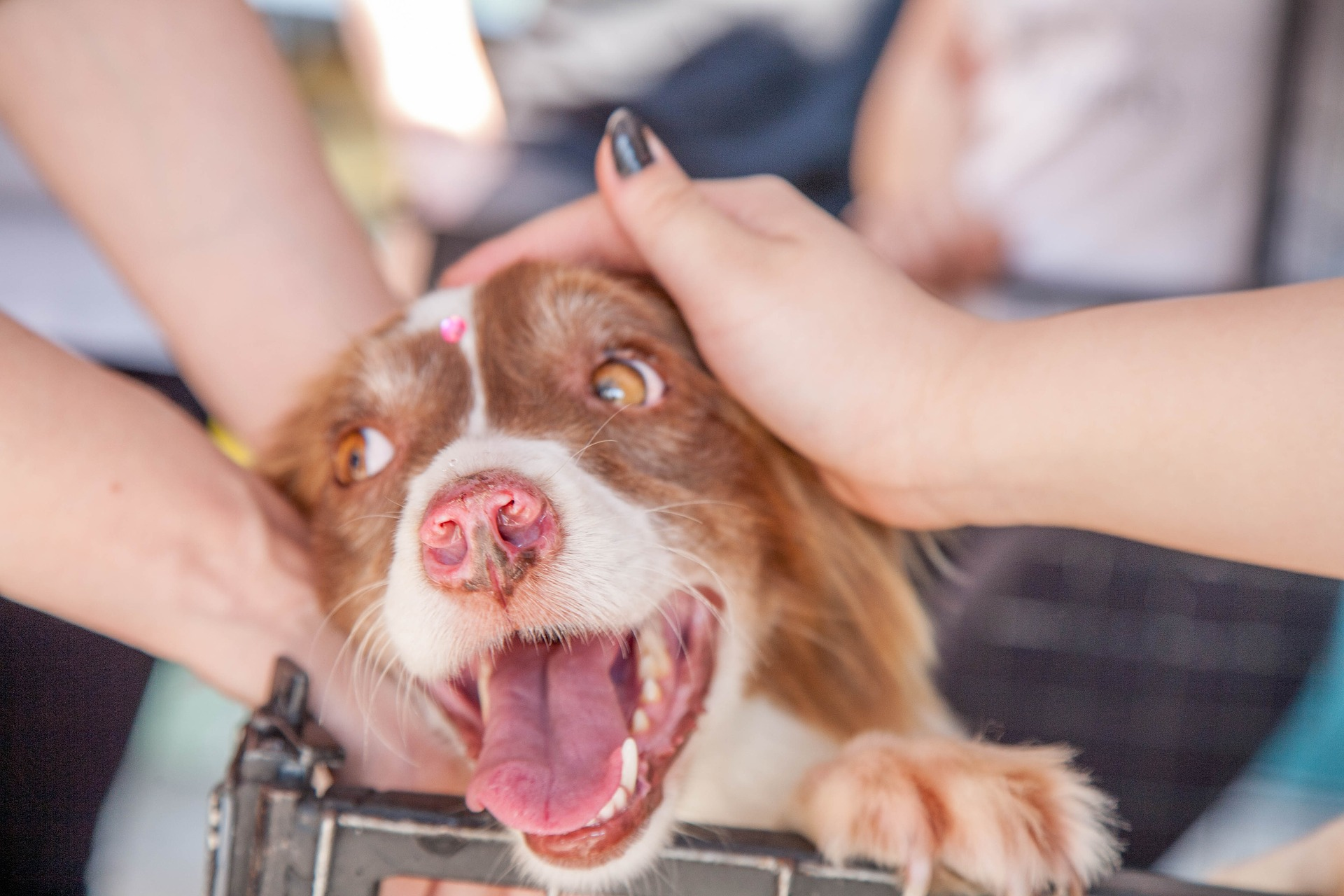 Att tänka på när man vill adoptera en hund