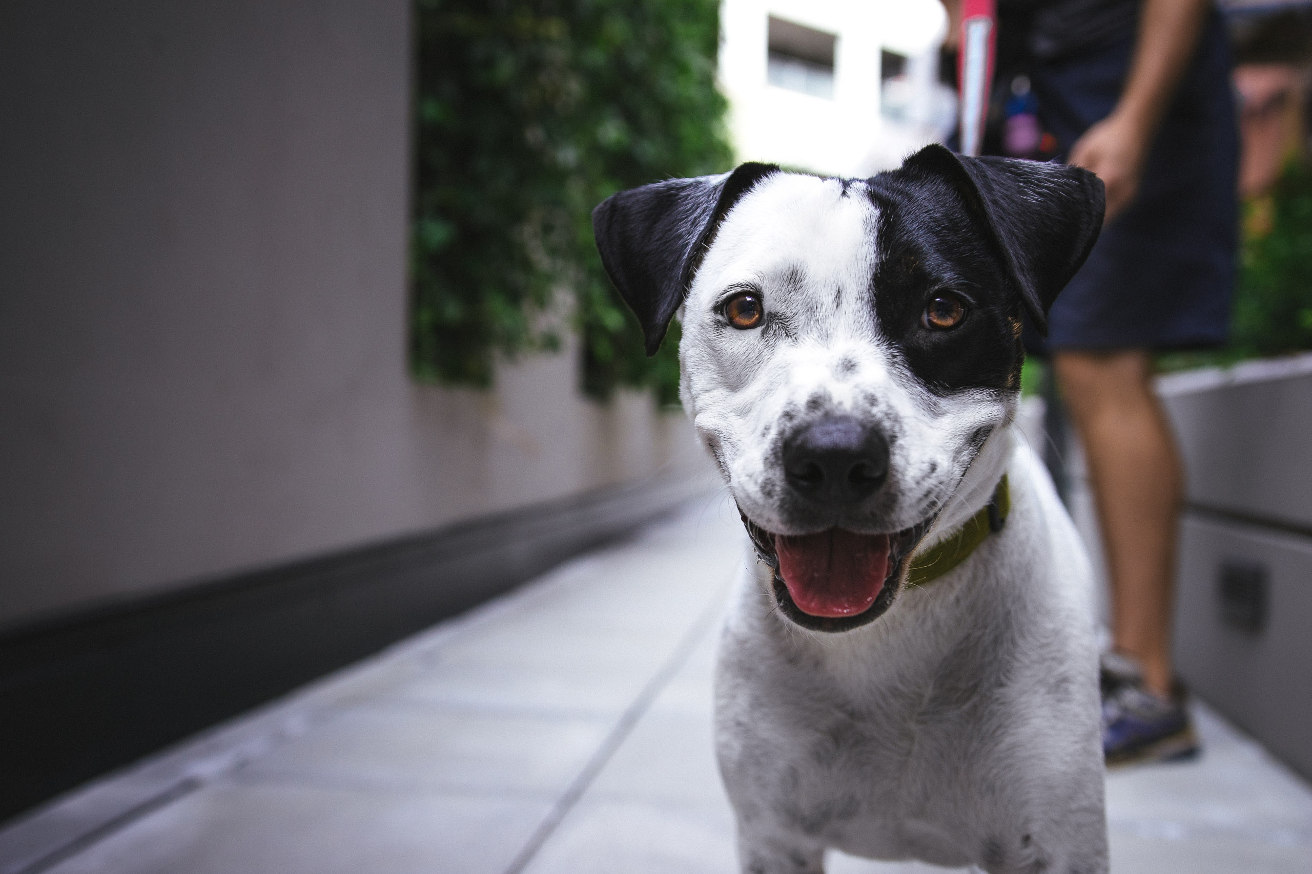 Hur människa och hund tolkar varandra