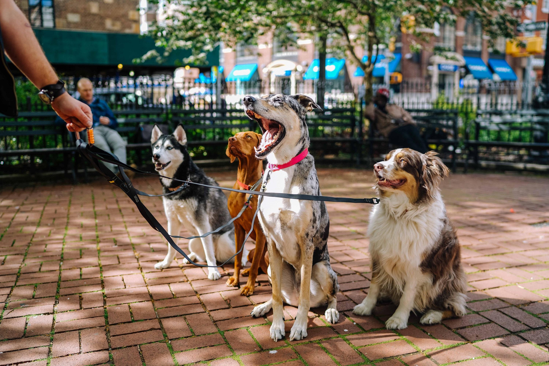 Kan man lära gamla hundar att sitta?