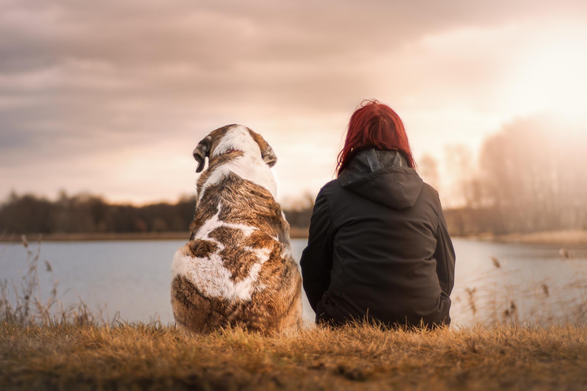 Glädjen att ha en hund