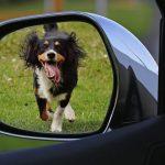Att bila med hund